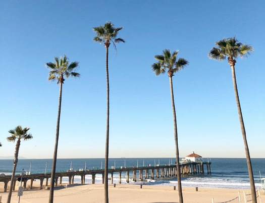 Manhattan Beach Palm Trees, California